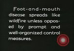 Image of foot and mouth disease United States USA, 1925, second 59 stock footage video 65675022112