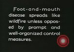 Image of foot and mouth disease United States USA, 1925, second 60 stock footage video 65675022112