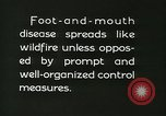 Image of foot and mouth disease United States USA, 1925, second 62 stock footage video 65675022112