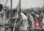 Image of Date packing Mesopotamia Iraq, 1929, second 44 stock footage video 65675022174