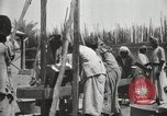Image of Date packing Mesopotamia Iraq, 1929, second 45 stock footage video 65675022174