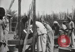 Image of Date packing Mesopotamia Iraq, 1929, second 46 stock footage video 65675022174
