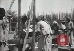 Image of Date packing Mesopotamia Iraq, 1929, second 47 stock footage video 65675022174
