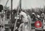 Image of Date packing Mesopotamia Iraq, 1929, second 48 stock footage video 65675022174