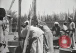 Image of Date packing Mesopotamia Iraq, 1929, second 49 stock footage video 65675022174