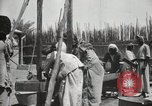 Image of Date packing Mesopotamia Iraq, 1929, second 50 stock footage video 65675022174