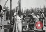 Image of Date packing Mesopotamia Iraq, 1929, second 51 stock footage video 65675022174