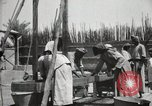 Image of Date packing Mesopotamia Iraq, 1929, second 52 stock footage video 65675022174