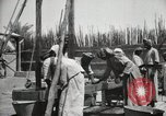 Image of Date packing Mesopotamia Iraq, 1929, second 53 stock footage video 65675022174