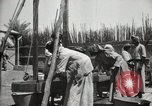 Image of Date packing Mesopotamia Iraq, 1929, second 54 stock footage video 65675022174