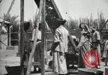 Image of Date packing Mesopotamia Iraq, 1929, second 62 stock footage video 65675022174