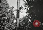 Image of Date harvesting Bacuba Beled Ruz Baghdad Iraq, 1929, second 41 stock footage video 65675022176