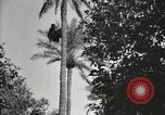 Image of Date harvesting Bacuba Beled Ruz Baghdad Iraq, 1929, second 58 stock footage video 65675022176