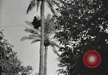Image of Date harvesting Bacuba Beled Ruz Baghdad Iraq, 1929, second 59 stock footage video 65675022176