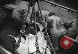 Image of Activity at the Port of Seattle Seattle Washington USA, 1935, second 55 stock footage video 65675022202