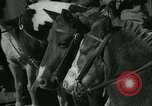 Image of Young children riding horses Kansas City Missouri USA, 1934, second 19 stock footage video 65675022443
