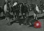 Image of Young children riding horses Kansas City Missouri USA, 1934, second 38 stock footage video 65675022443