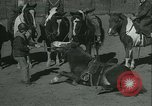 Image of Young children riding horses Kansas City Missouri USA, 1934, second 39 stock footage video 65675022443
