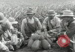 Image of Hawaiian pineapple workers resting Hawaii USA, 1916, second 28 stock footage video 65675022621