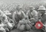 Image of Hawaiian pineapple workers resting Hawaii USA, 1916, second 29 stock footage video 65675022621