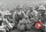 Image of Hawaiian pineapple workers resting Hawaii USA, 1916, second 30 stock footage video 65675022621