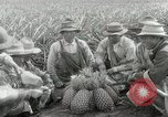 Image of Hawaiian pineapple workers resting Hawaii USA, 1916, second 31 stock footage video 65675022621
