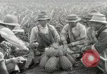 Image of Hawaiian pineapple workers resting Hawaii USA, 1916, second 33 stock footage video 65675022621