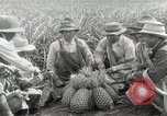 Image of Hawaiian pineapple workers resting Hawaii USA, 1916, second 34 stock footage video 65675022621