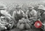Image of Hawaiian pineapple workers resting Hawaii USA, 1916, second 35 stock footage video 65675022621