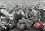 Image of Hawaiian pineapple workers resting Hawaii USA, 1916, second 36 stock footage video 65675022621