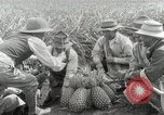 Image of Hawaiian pineapple workers resting Hawaii USA, 1916, second 37 stock footage video 65675022621