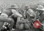 Image of Hawaiian pineapple workers resting Hawaii USA, 1916, second 38 stock footage video 65675022621