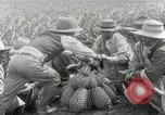Image of Hawaiian pineapple workers resting Hawaii USA, 1916, second 39 stock footage video 65675022621