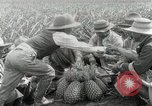 Image of Hawaiian pineapple workers resting Hawaii USA, 1916, second 40 stock footage video 65675022621