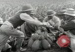Image of Hawaiian pineapple workers resting Hawaii USA, 1916, second 41 stock footage video 65675022621
