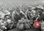 Image of Hawaiian pineapple workers resting Hawaii USA, 1916, second 43 stock footage video 65675022621