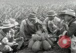 Image of Hawaiian pineapple workers resting Hawaii USA, 1916, second 44 stock footage video 65675022621