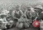 Image of Hawaiian pineapple workers resting Hawaii USA, 1916, second 46 stock footage video 65675022621