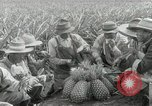 Image of Hawaiian pineapple workers resting Hawaii USA, 1916, second 47 stock footage video 65675022621