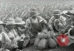 Image of Hawaiian pineapple workers resting Hawaii USA, 1916, second 48 stock footage video 65675022621