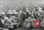 Image of Hawaiian pineapple workers resting Hawaii USA, 1916, second 49 stock footage video 65675022621
