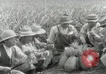 Image of Hawaiian pineapple workers resting Hawaii USA, 1916, second 50 stock footage video 65675022621