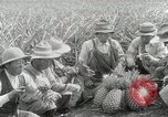Image of Hawaiian pineapple workers resting Hawaii USA, 1916, second 51 stock footage video 65675022621