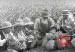 Image of Hawaiian pineapple workers resting Hawaii USA, 1916, second 53 stock footage video 65675022621