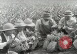 Image of Hawaiian pineapple workers resting Hawaii USA, 1916, second 54 stock footage video 65675022621