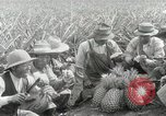 Image of Hawaiian pineapple workers resting Hawaii USA, 1916, second 55 stock footage video 65675022621