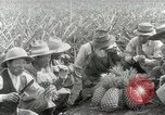 Image of Hawaiian pineapple workers resting Hawaii USA, 1916, second 56 stock footage video 65675022621