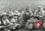 Image of Hawaiian pineapple workers resting Hawaii USA, 1916, second 57 stock footage video 65675022621