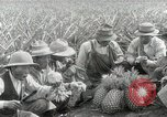Image of Hawaiian pineapple workers resting Hawaii USA, 1916, second 58 stock footage video 65675022621