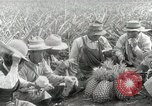 Image of Hawaiian pineapple workers resting Hawaii USA, 1916, second 59 stock footage video 65675022621
